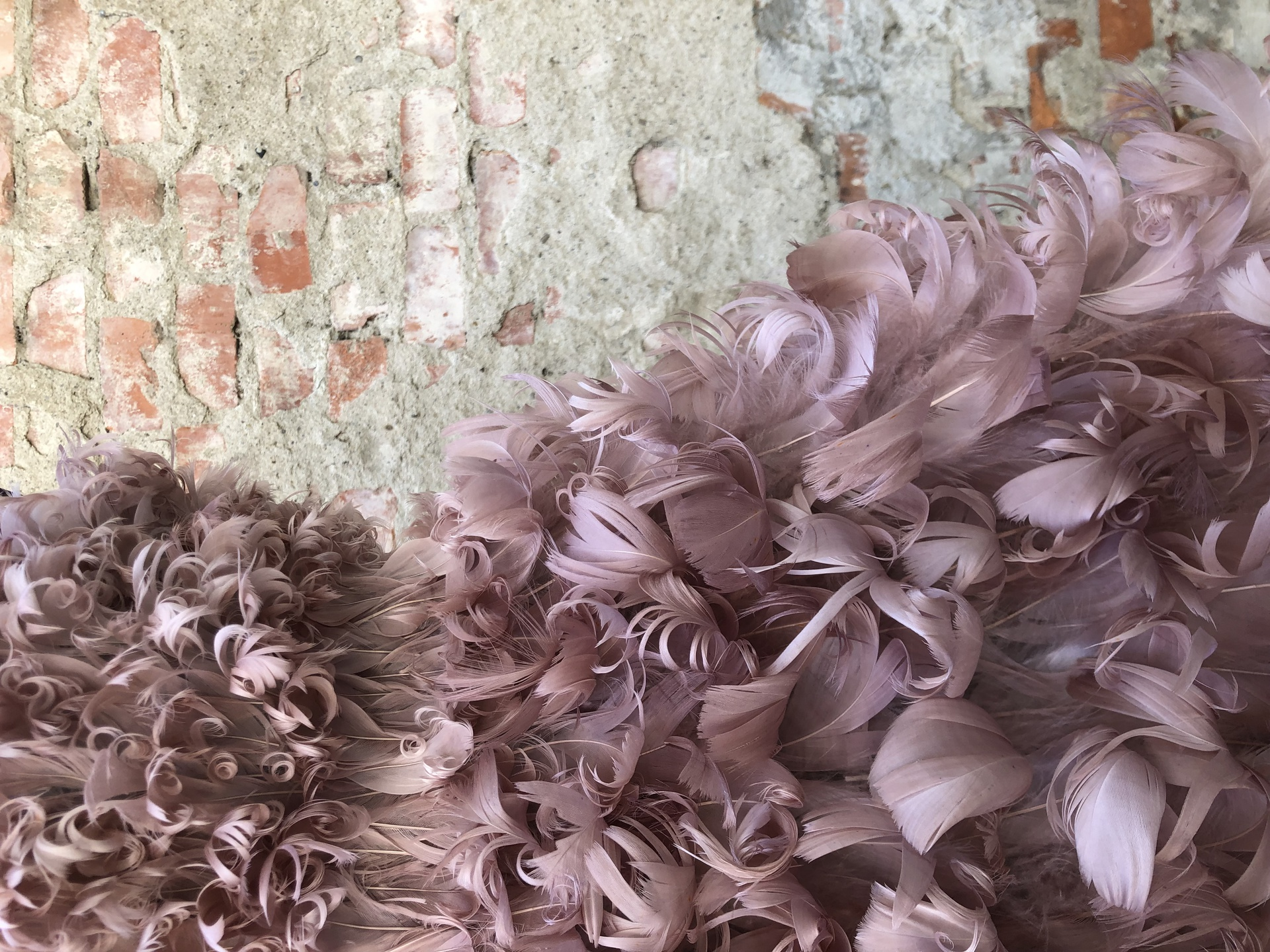 mazzanti-piume-feather-ornament-makers-firenze-thumbnail